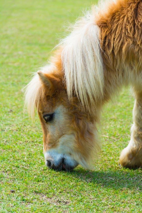 Barnhästen äter gräset arkivfoto