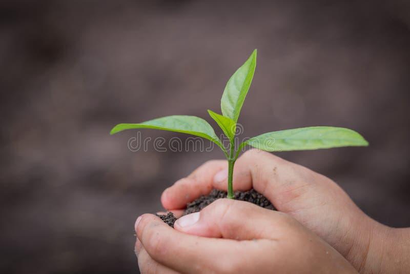 Barnhanden som rymmer en liten planta, växt ett träd, förminskar global uppvärmning, dag för världsmiljö royaltyfri foto