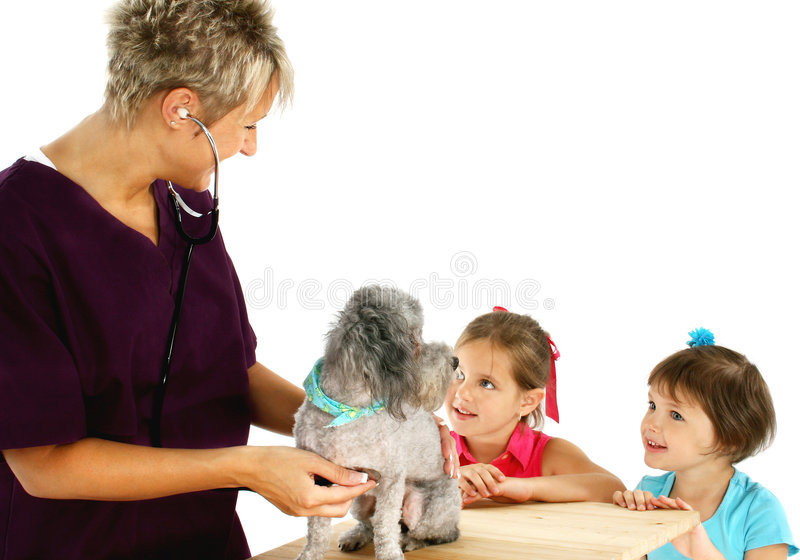 barnhundvet arkivbild