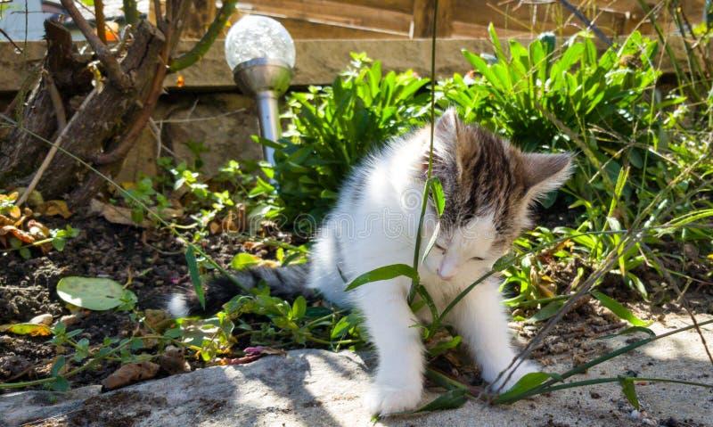 Barnkatt leker i trädgård royaltyfri foto