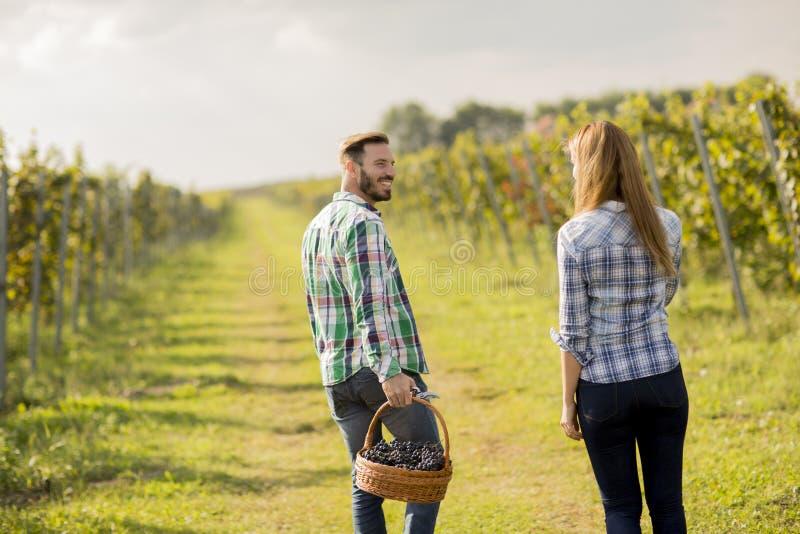 Barnpar i vingården arkivfoto