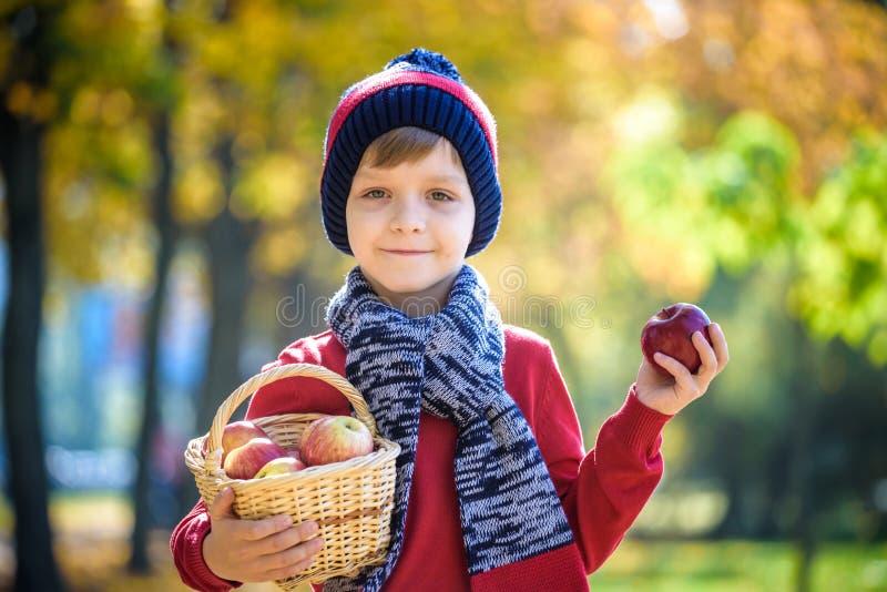 Barnplockningäpplen i höst Behandla som ett barn lite pojken som spelar i fruktträdgård för äppleträd Ungehackafrukt i en korg Li arkivbild