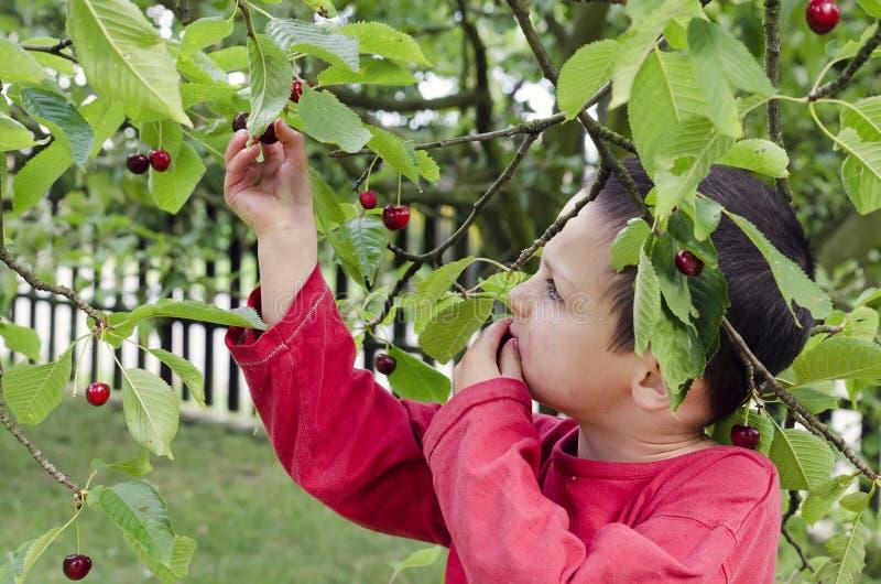 Barnplockning och ätakörsbär royaltyfri fotografi