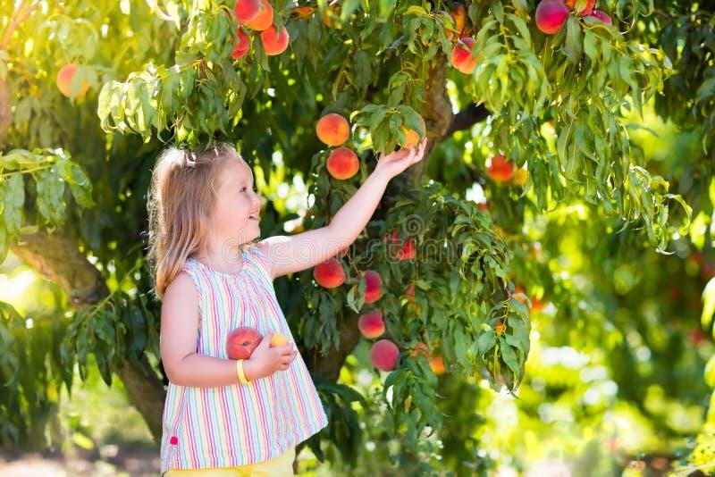 Barnplockning och ätapersika från fruktträdet royaltyfria foton