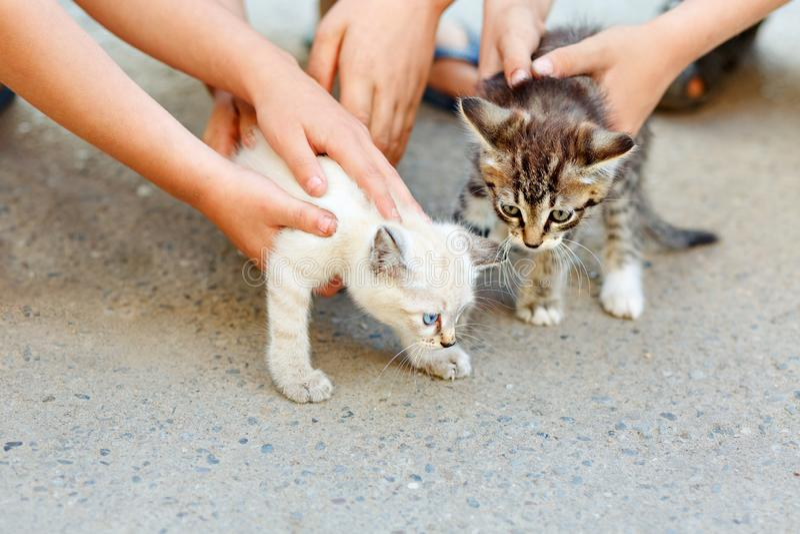 Barns händer som daltar två lilla lösa kattungar Begreppet av respekt för mänskliga djur arkivfoto