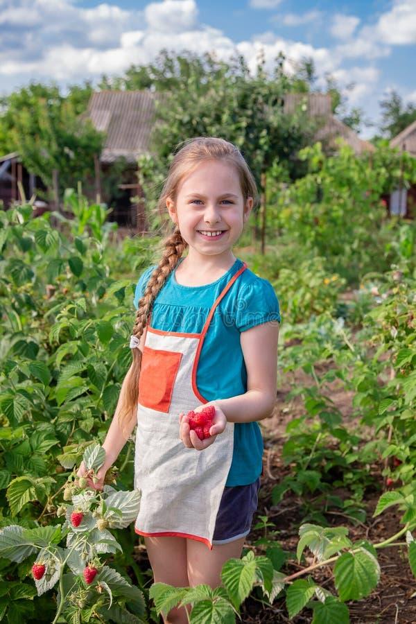 Barns plockninghallon En gullig liten flicka samlar nya frukter på en organisk hallonlantgård Barn som arbeta i trädgården och arkivbild