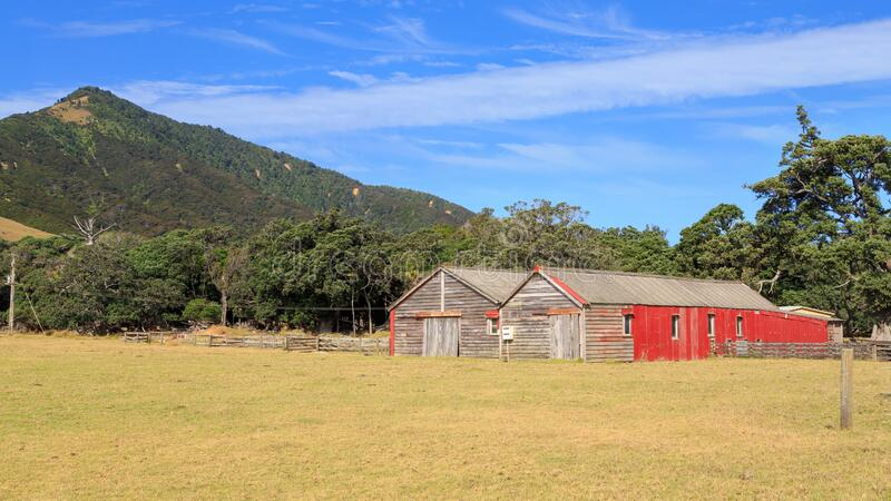Barns in a scenic summer landscape, New Zealand. A pair of old wooden and corrugated iron barns in a rural landscape in the far north of the Coromandel Peninsula stock photography