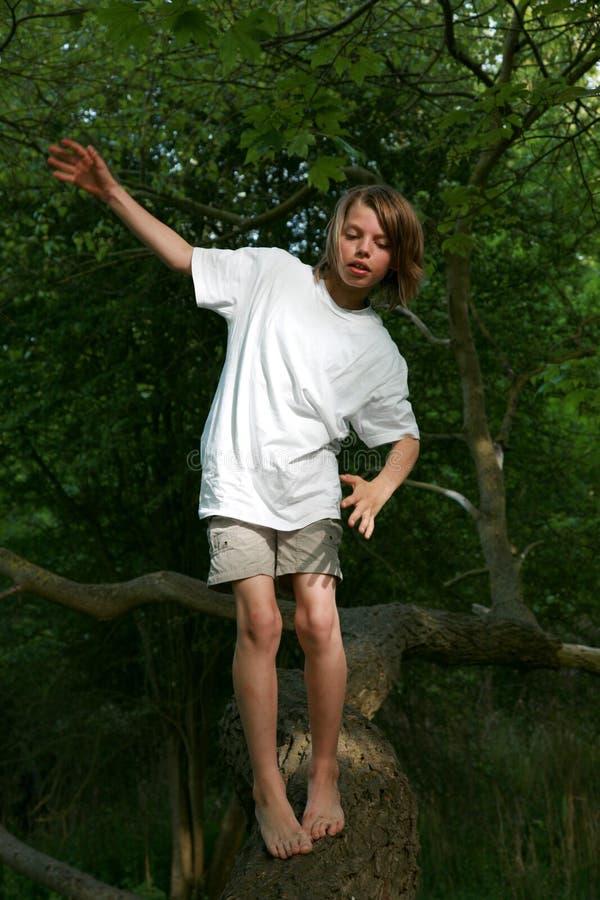 barntree royaltyfria foton