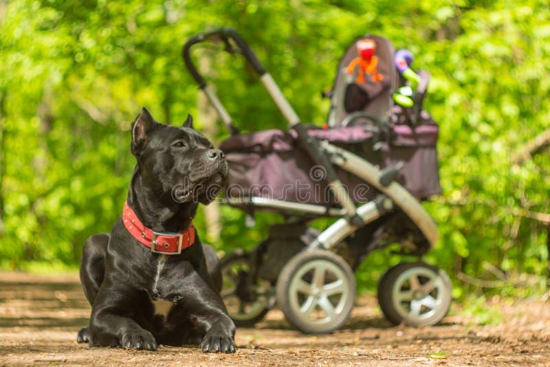 Barnvagn och stor svart förmyndarehund royaltyfri fotografi