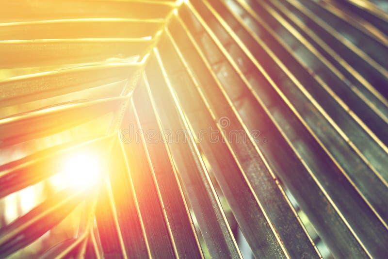 Barré de la palmette tropicale avec la lumière du soleil orange photos stock