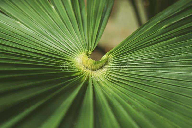 Barr? de la palmette, fond vert abstrait de texture photographie stock