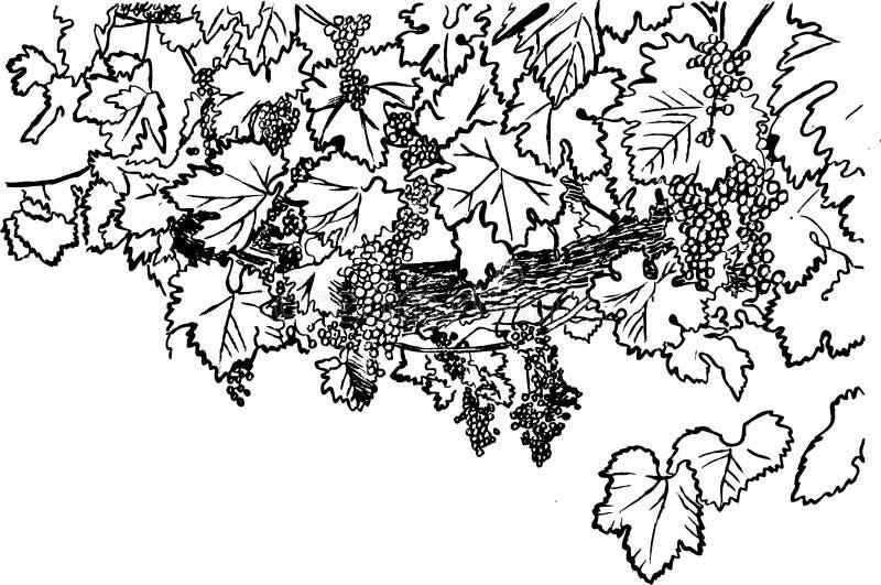 Barra da uva ilustração royalty free