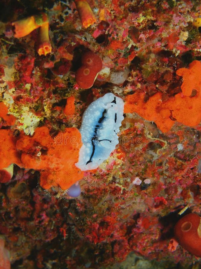 Barra de mar fotografía de archivo