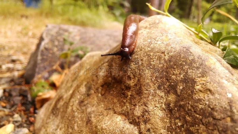 Barra del plátano en roca imágenes de archivo libres de regalías