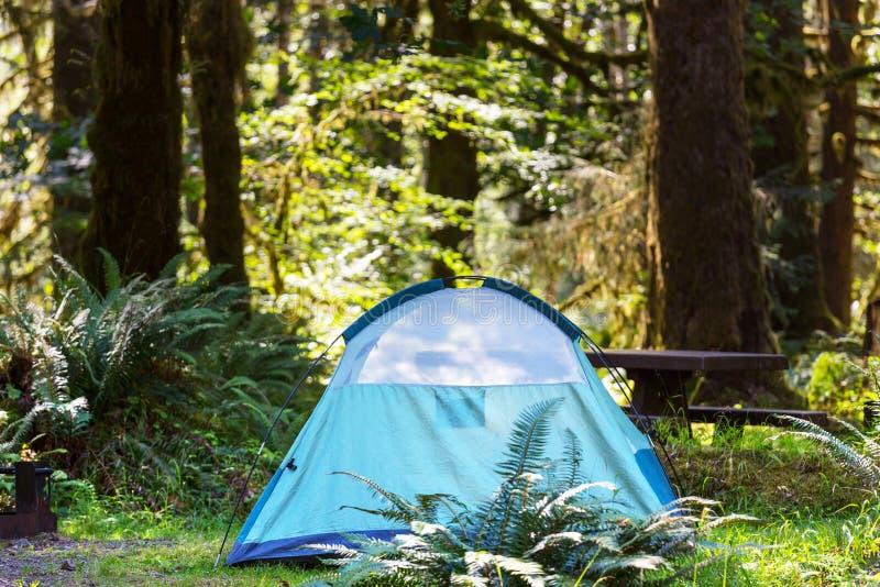 Barraca na floresta foto de stock royalty free