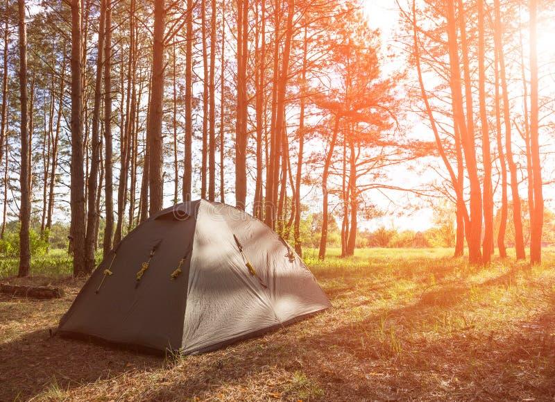 Barraca no acampamento da floresta da manhã e na natureza bonita imagens de stock royalty free
