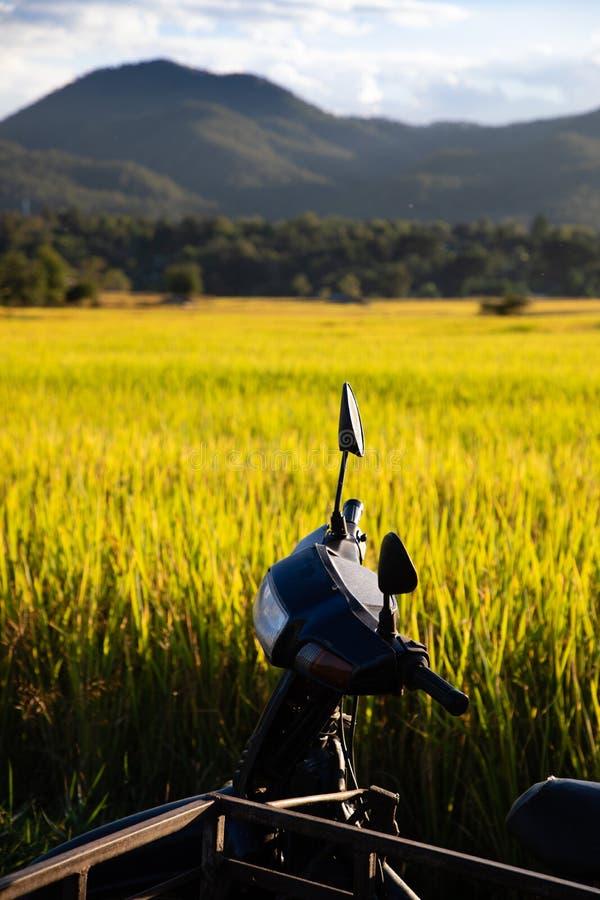 Barraca simples no campo do arroz com para trás-iluminação imagens de stock