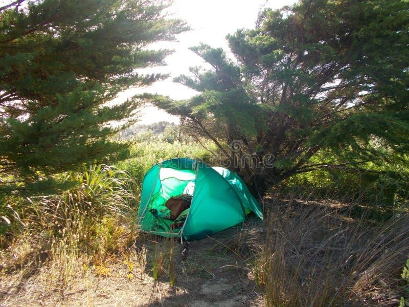 Barraca sob a árvore na paisagem da duna da grama na praia noventa Nova Zelândia da milha imagem de stock