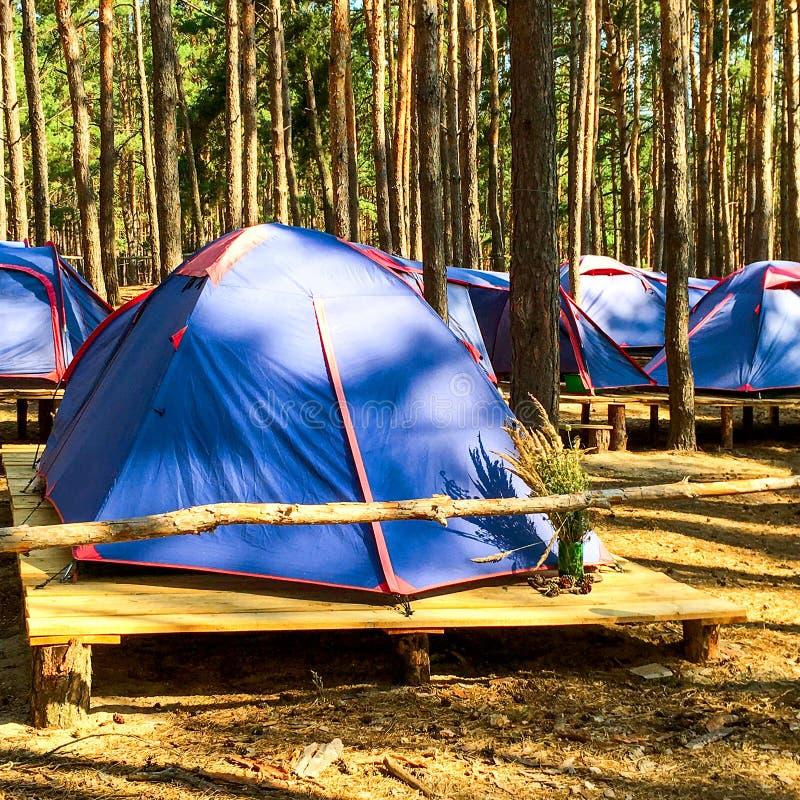 Barracas azuis dos escuteiros ou dos turistas na floresta no platfor de madeira fotografia de stock