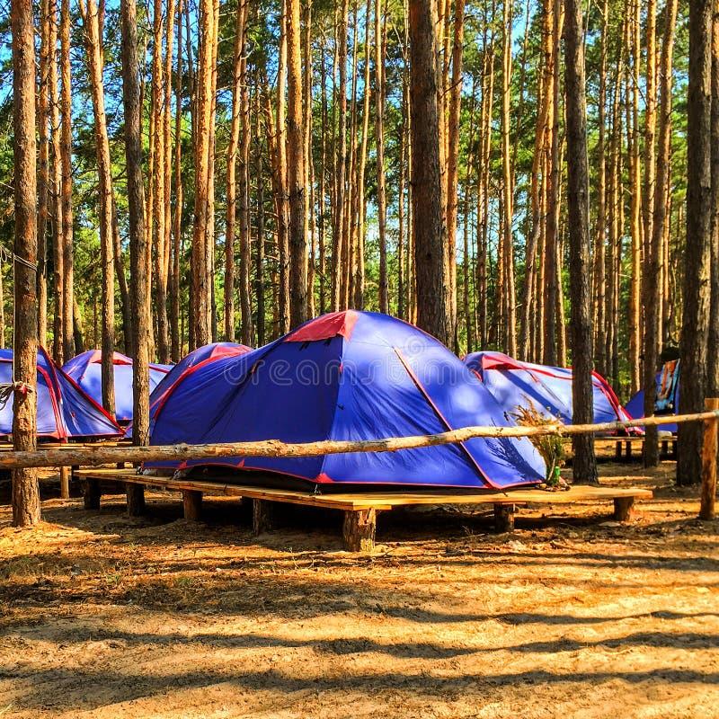 Barracas azuis dos escuteiros ou dos turistas na floresta no platfor de madeira imagem de stock