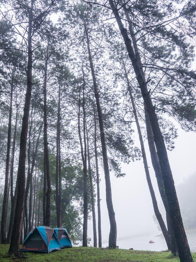 Barracas do turista na floresta fotografia de stock royalty free
