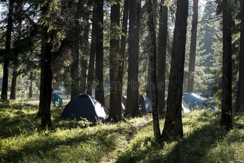 Barracas do turista na floresta entre pinhos fotografia de stock