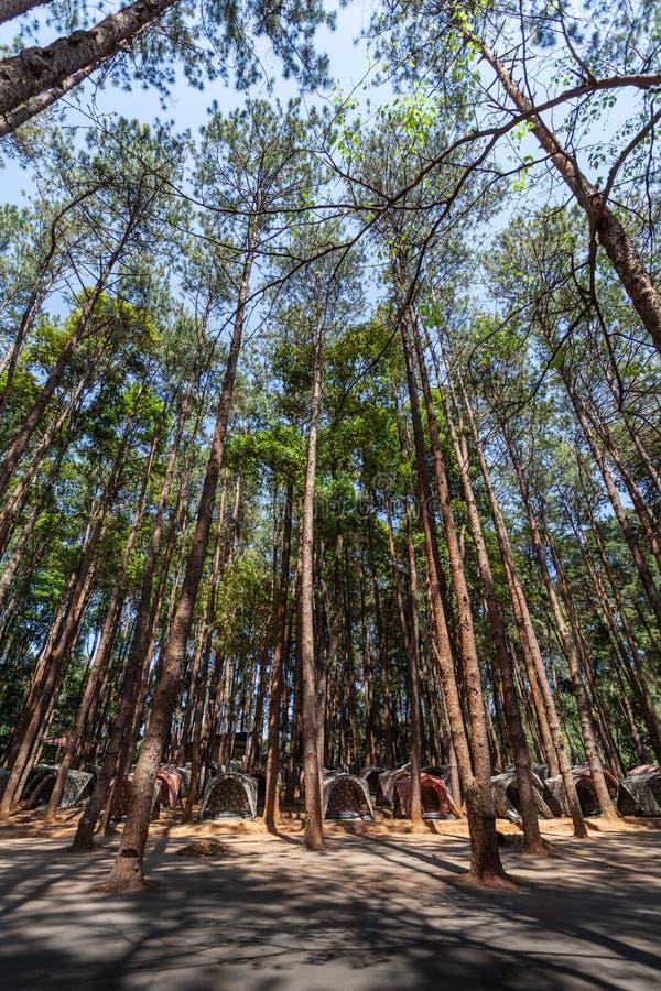 barracas para acampar sob os pinheiros na montanha alta do parque nacional de Doi Inthanon fotografia de stock royalty free