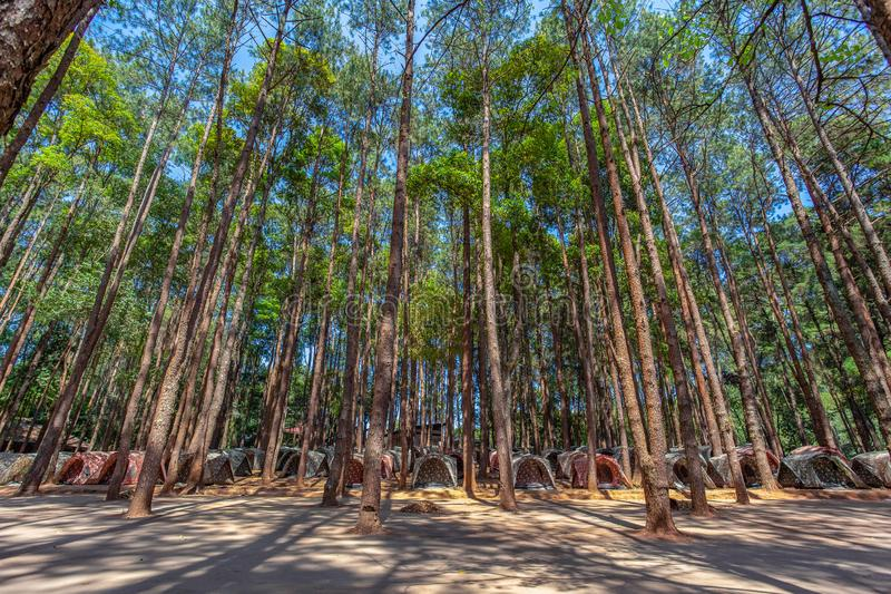 barracas para acampar sob os pinheiros na montanha alta do parque nacional de Doi Inthanon foto de stock
