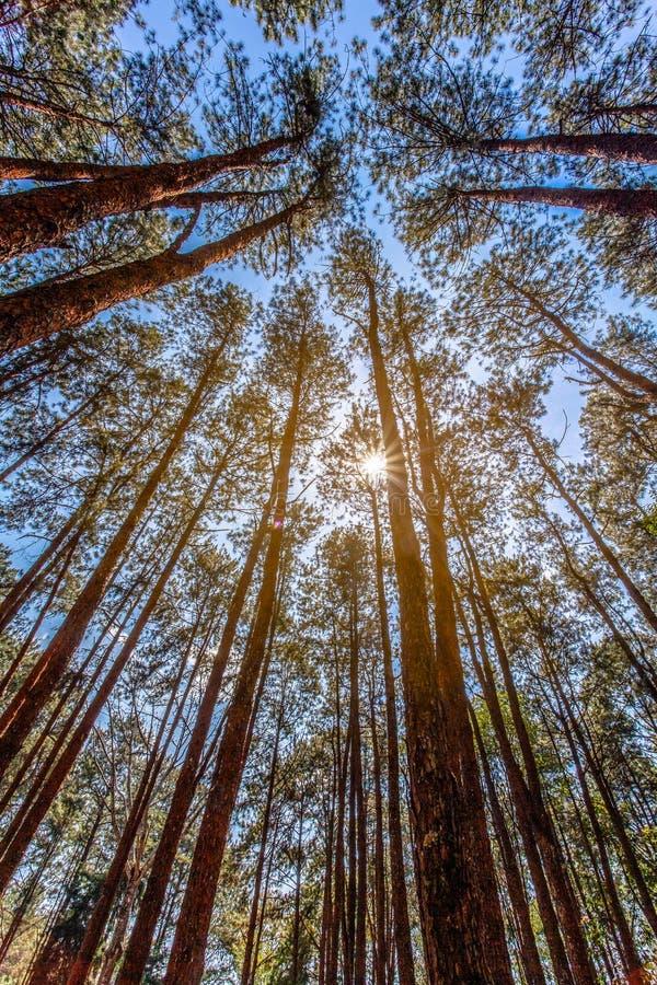 barracas para acampar sob os pinheiros na montanha alta do parque nacional de Doi Inthanon fotos de stock