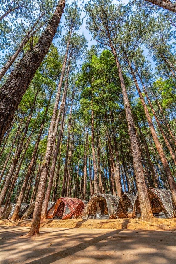 barracas para acampar sob os pinheiros na montanha alta do parque nacional de Doi Inthanon foto de stock royalty free