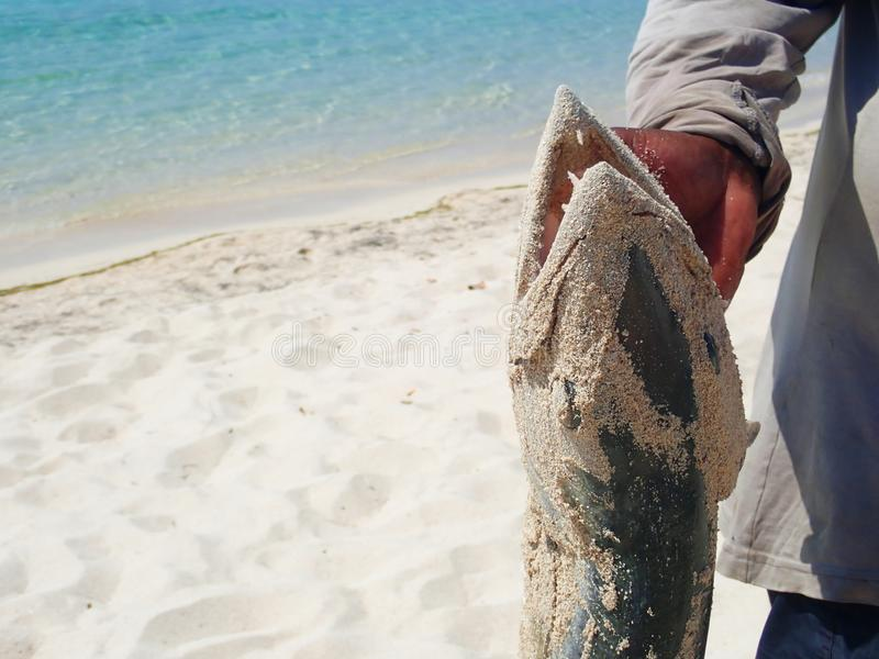 Barracuda που αλιεύει στον ωκεανό στοκ φωτογραφία με δικαίωμα ελεύθερης χρήσης
