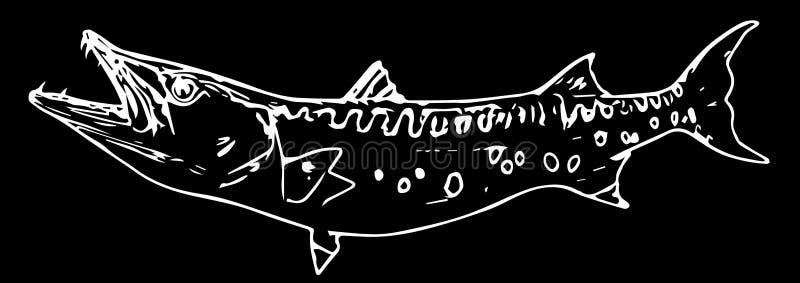 Barracuda cuda ryby drapieżnik na czarnym tle royalty ilustracja