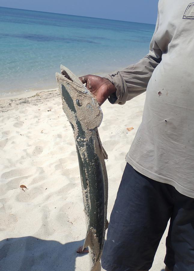 Barracuda fishing on the ocean stock photos