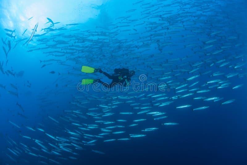 Barracuda obrazka Sudan Czerwonego morza podwodny nurkowy safari zdjęcia royalty free