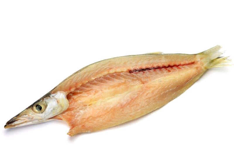 barracuda susząca ryba obrazy stock