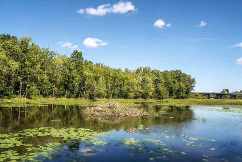 Barrage de castor sur la rivière de DES Milles Iles photo libre de droits