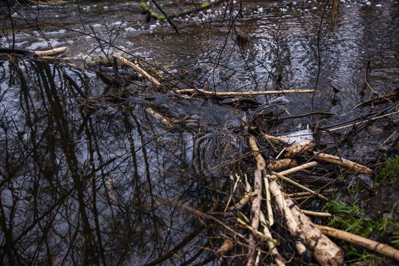 Barragem de castores feitas no rio, vista lateral, fechada fotografia de stock