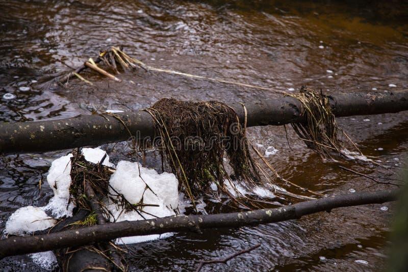 Barragem de castores feitos no rio, vista da frente fotografia de stock