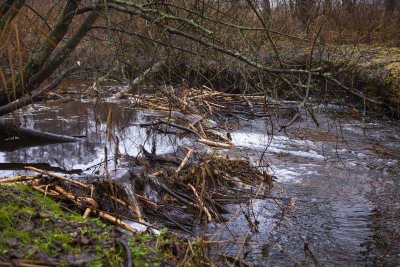 Barragem de castores feitos no rio, vista do lado fotos de stock royalty free