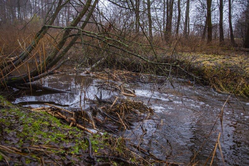 Barragem de castores feitos no rio, vista do lado fotografia de stock