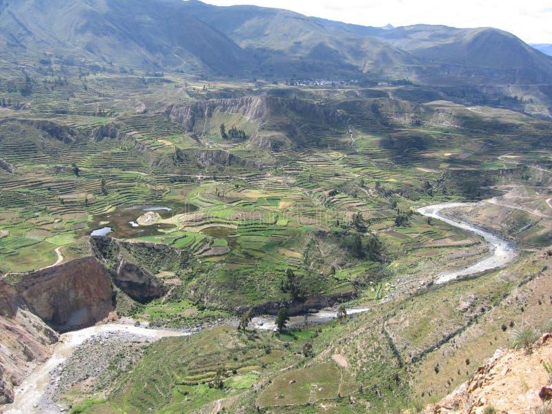 Barranca de Colca fotografía de archivo libre de regalías