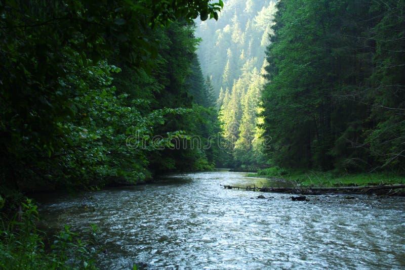Barranca y río en Eslovaquia 2 fotos de archivo libres de regalías