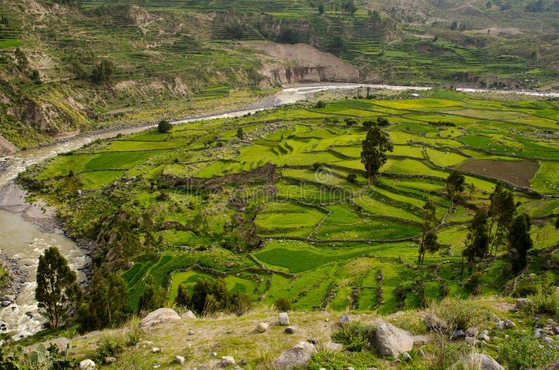 Barranco de Colca, Perú imagen de archivo libre de regalías