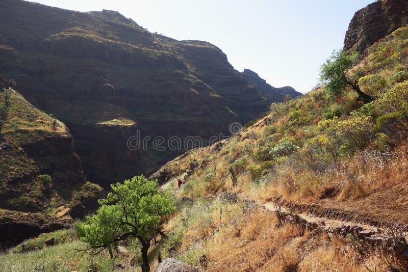 Barranco de Guarimiar. In La Gomera Canary island royalty free stock images
