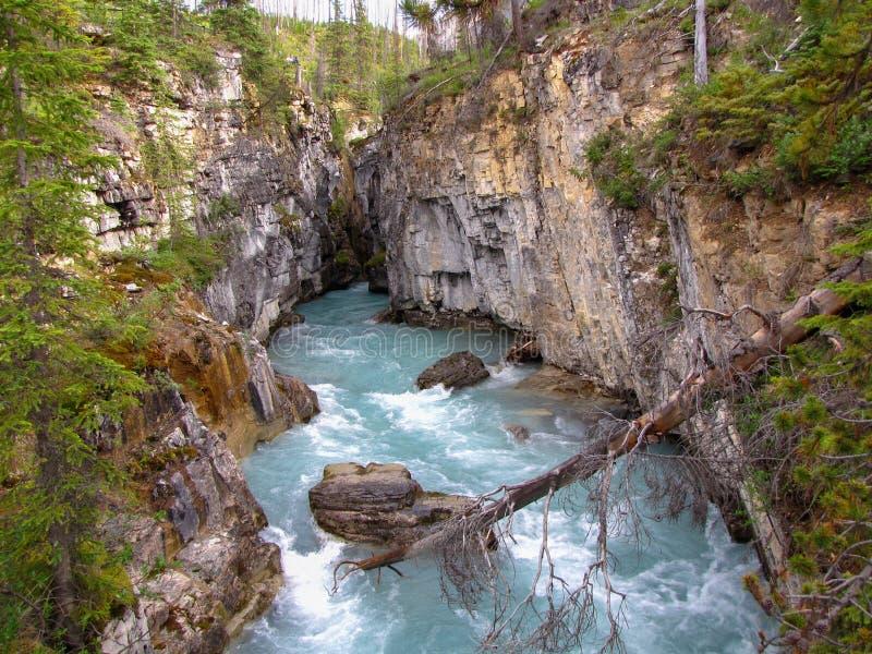 Barranco de mármol, parque nacional de Kootenay, montañas rocosas canadienses de la Columbia Británica, Canadá fotografía de archivo