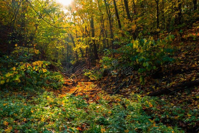 Barranco en el bosque del otoño imagenes de archivo