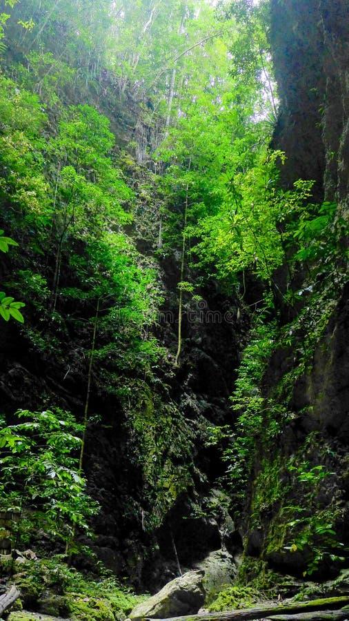 Barranco natural de la roca en la selva fotos de archivo