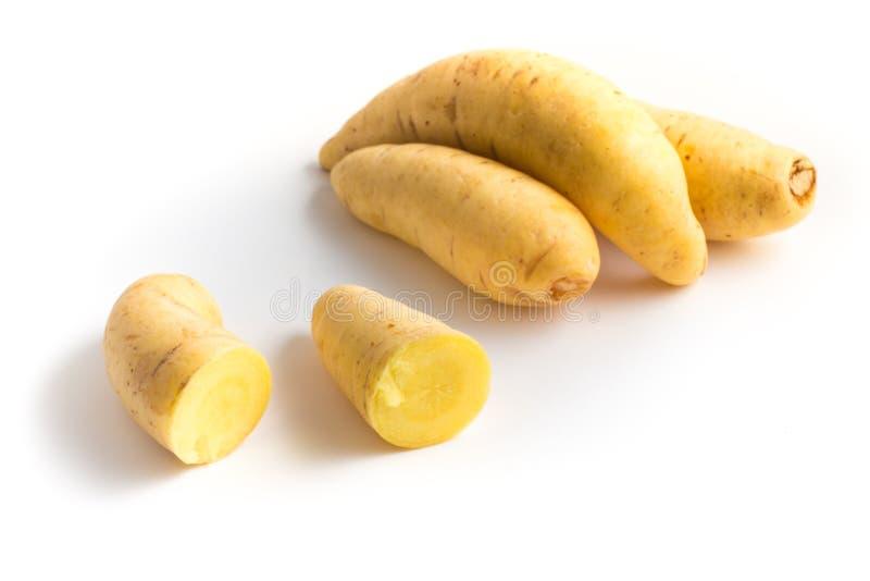 Barred Potato. Baroa. On white background stock image