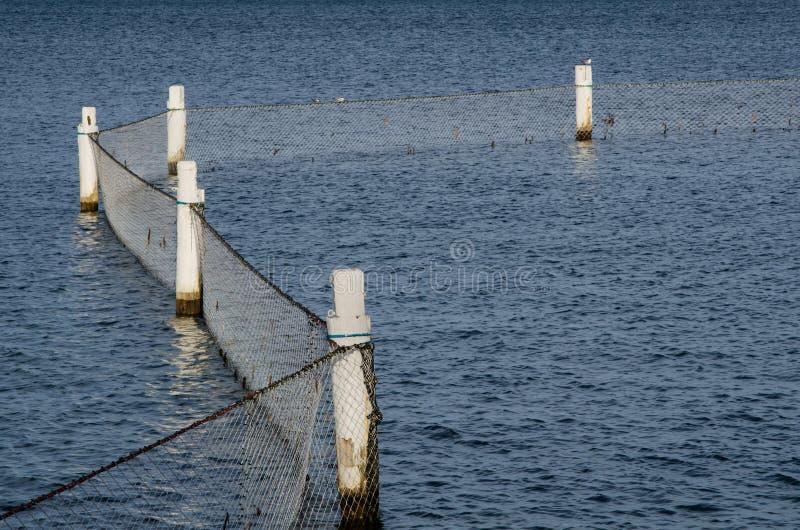 A barreira líquida do tubarão é a barreira protetora da fundo do mar-à-superfície que é colocada em torno de uma praia para prote imagens de stock