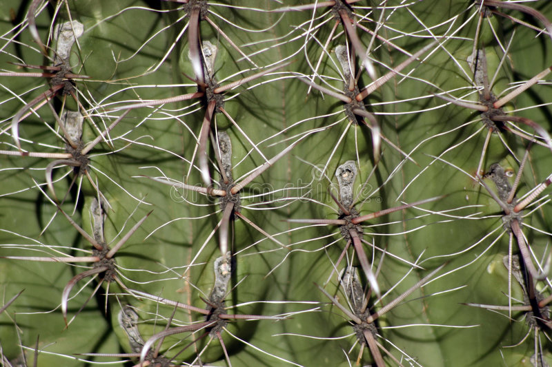 Download Barrel Cactus Close Up Stock Image - Image: 58521
